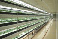 Fully-controlled plant factory